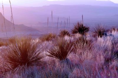 Sunset hues, Big Bend National Park, Texas by Bonnie Jaimes